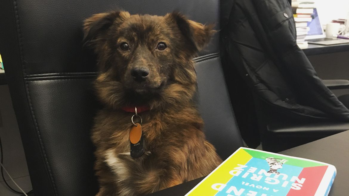Cover Photo: Meet Grizz, our literary pet of the month for December