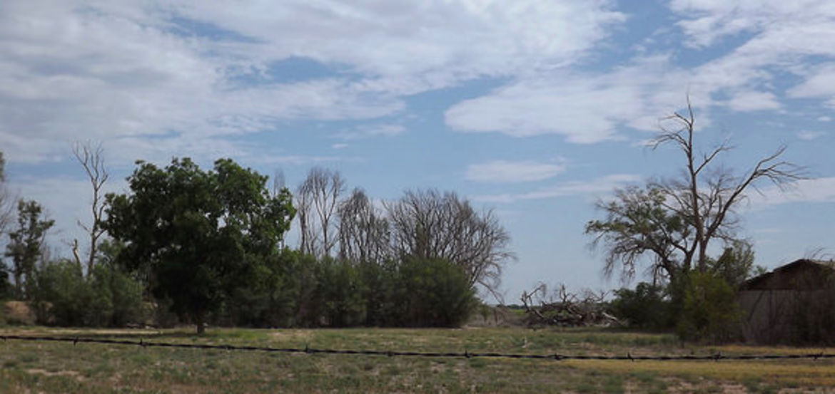 Cover Photo: Farm, Roswell, New Mexico