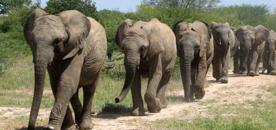 Cover Photo: ELEPHANT by Doug Benerofe