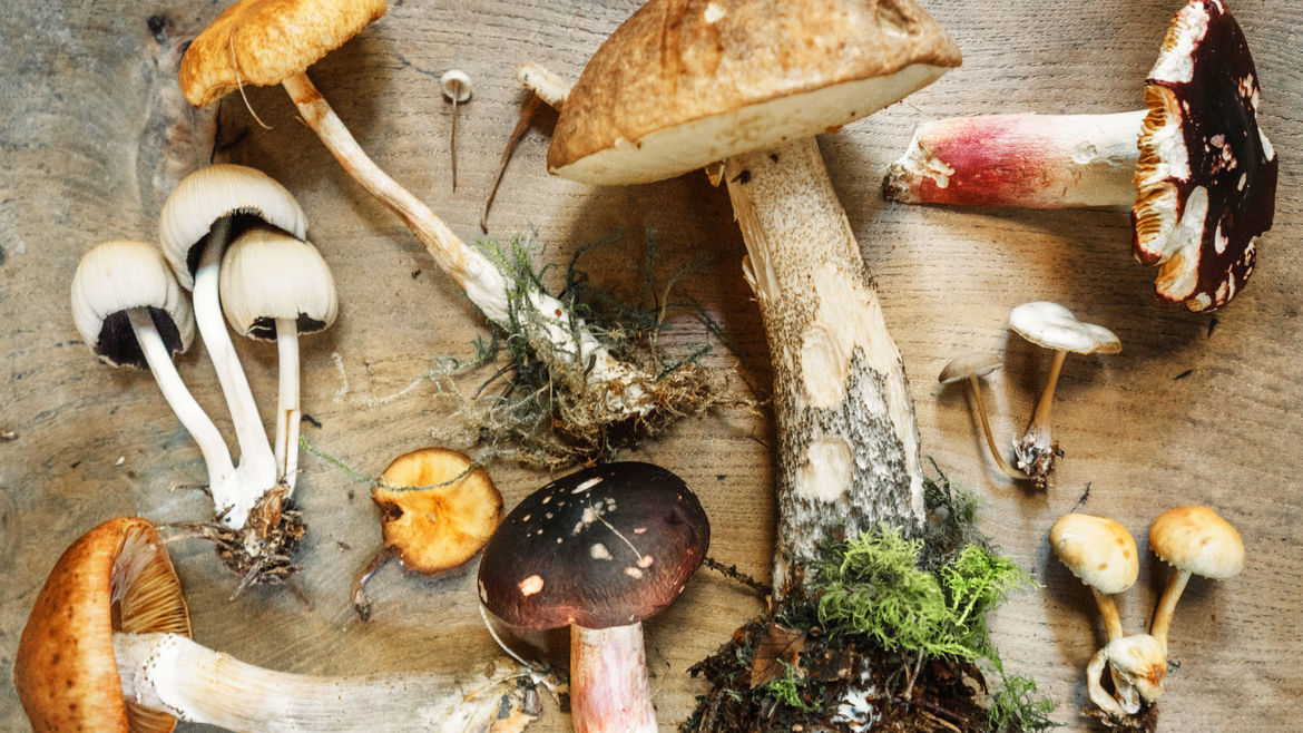 Cover Photo: A variety of different mushrooms artfully displayed against a wood plank backdrop