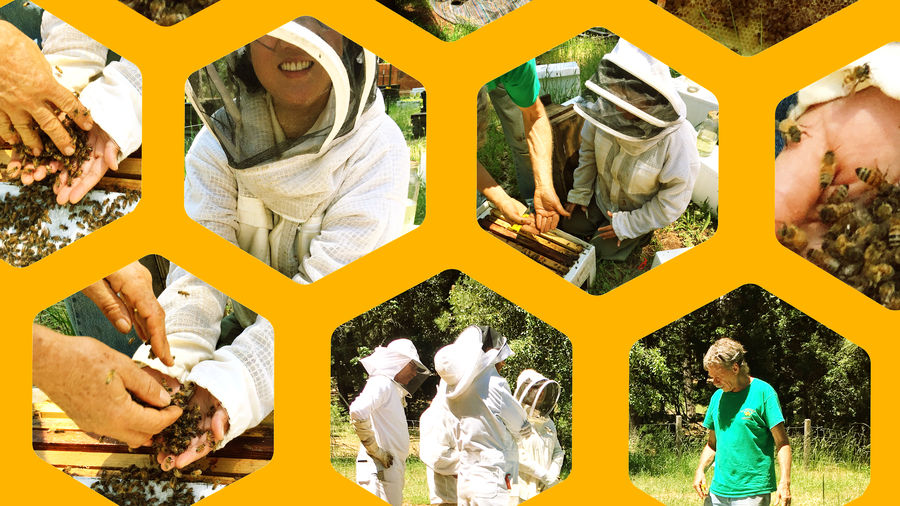 Cover Photo: A collage of photos of the author smiling in a beekeeper suit with hundreds of live bees in her open palms