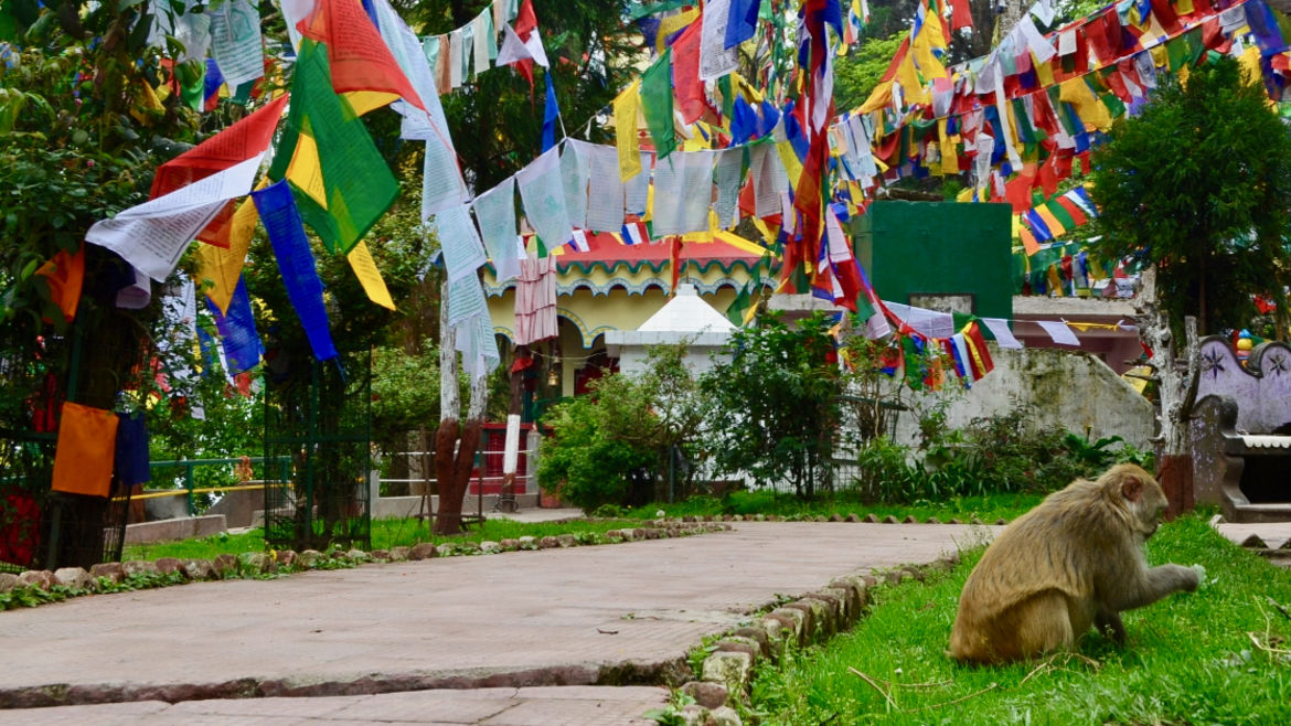 Cover Photo: A photo of a walkway leading to a colorful yellow, green, and red building, rainbow streamers hanging above the stone path. A monkey inspects the grass on the side.