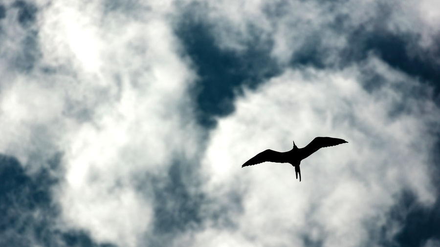 Cover Photo: photograph of a bird in flight against a blue sky and white wispy clouds