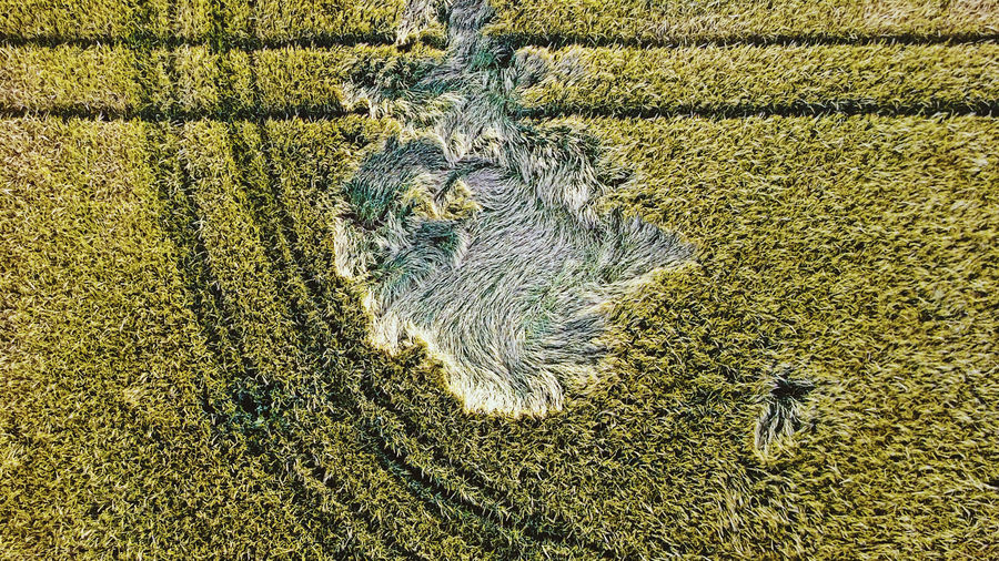 Cover Photo: Taken from above, this photograph looks down into a yellowing field with a patch of grass pressed down in the middle of it, as if an animal has rolled around and slept there, or as if the impression a strong wind blowing through the grass was caught and remained