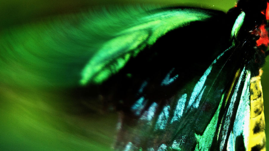 Cover Photo: closeup of a green, black, aqua, and yellow butterfly wing