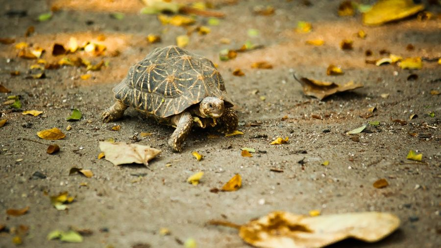 Cover Photo: A photo of a turtle crossing a concrete street. Around the turtle are fall leaves that have fallen to the ground.