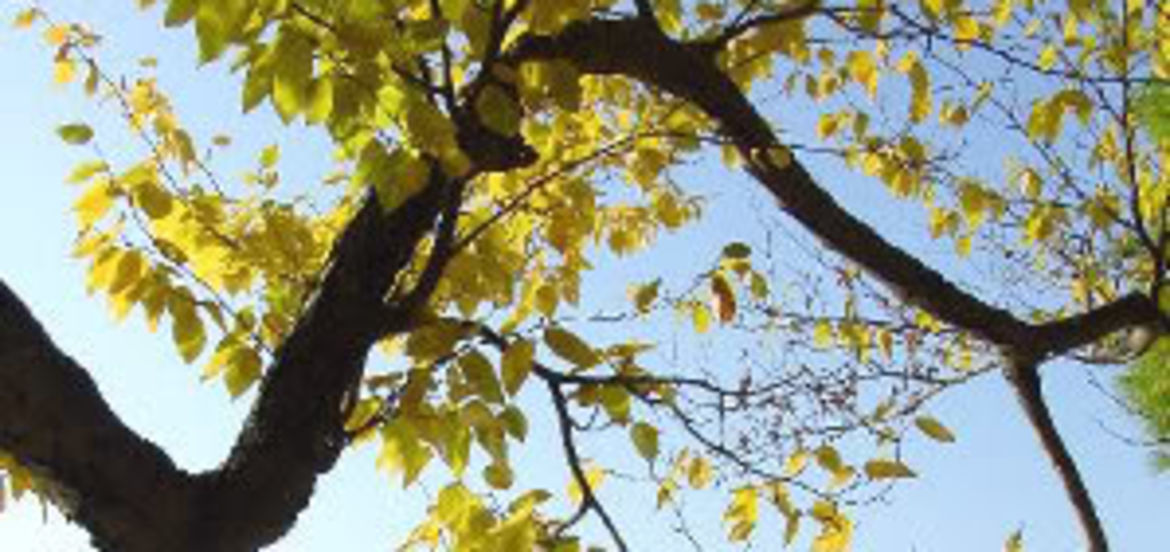 Cover Photo: Traces of Fall by Lauren Suval
