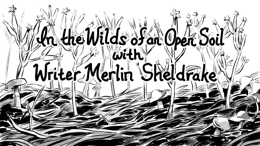"Cover Photo: A field of fungi with the words ""In the Wilds of an Open Soil with Writer Merlin Sheldrake"" across it"