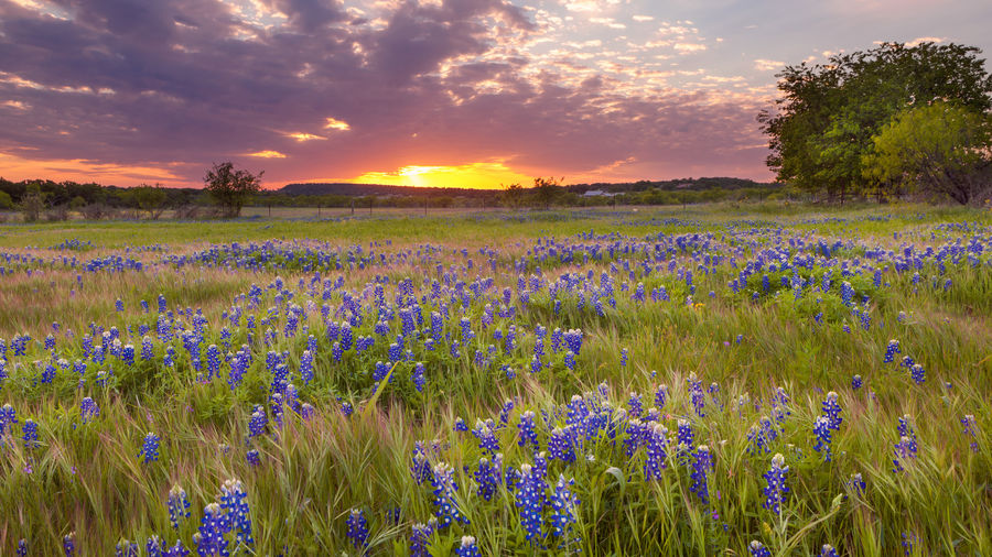 Cover Photo: Texas by Gaya Khmoyan