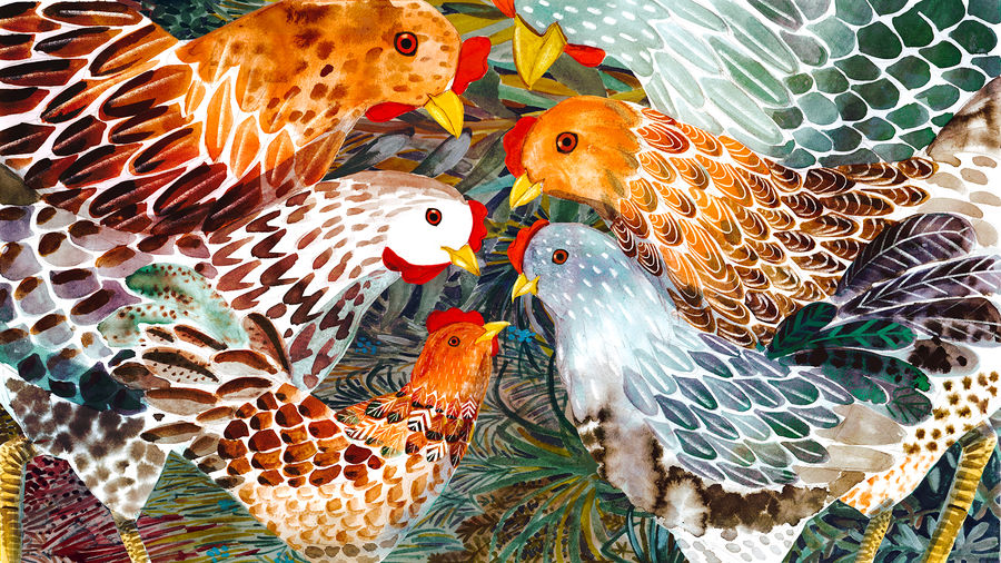 Cover Photo: Six beautiful vibrant chickens of varying sizes and colors tower over one another