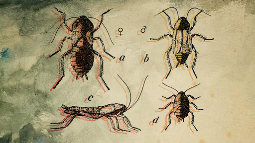 Cover Photo: This illustration shows illustration of four different cockroach species on a textured background. The insects are outlined in oranges and yellows with a black imprint.