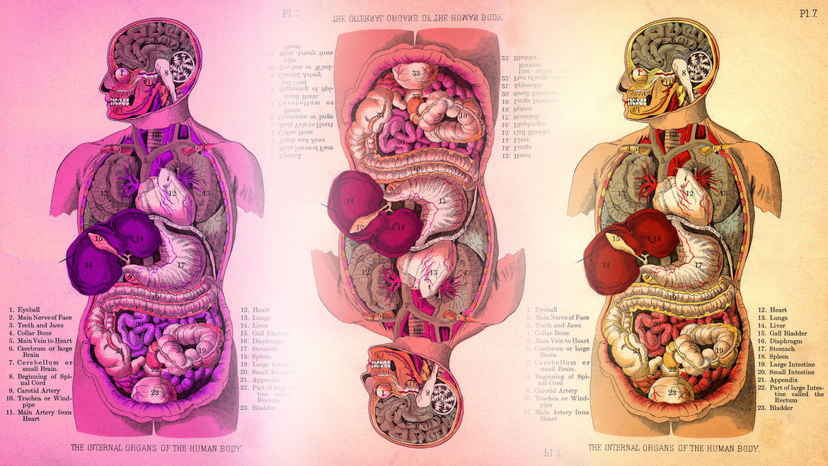 Cover Photo: Three color-coded and labeled illustrations of cross-sections of the human body, glowing with warm light.