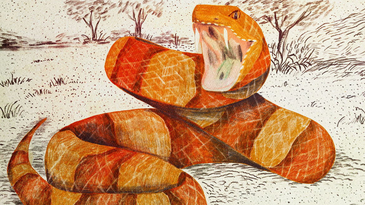 Cover Photo: An illustration of a snake, poised to strike, fangs bared, as if almost smiling