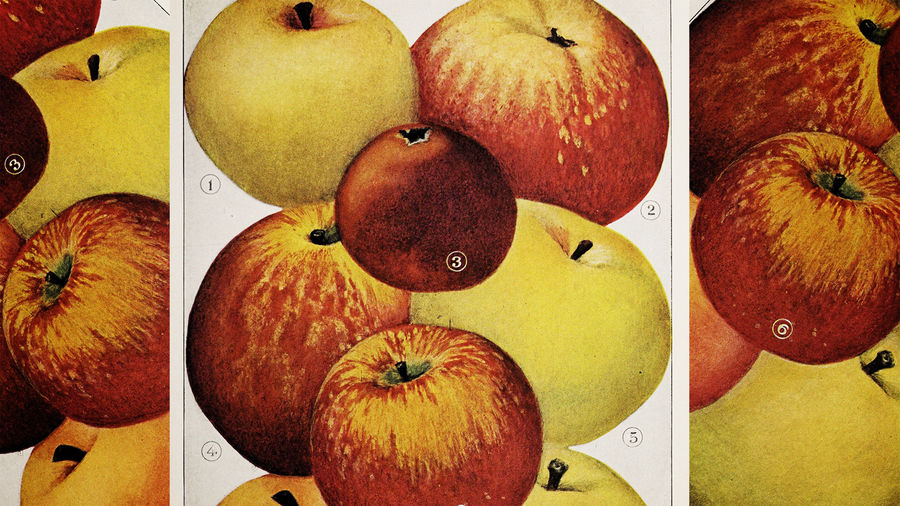 Cover Photo:  Illustration from The Encyclopedia of Food by Artemas Ward/Wikimedia Commons