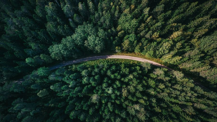 Cover Photo: In this photograph, we see a dense pine forest from above. A road curves through the center of the photograph and the left side of the photograph is darker than the other, as if closer to a mountain.