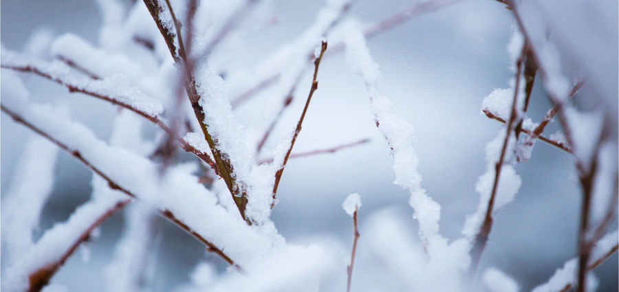 Cover Photo: Winter Poem by Lauren Suval