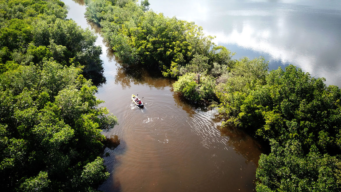 Cover Photo: An aerial view of the Florida everglades