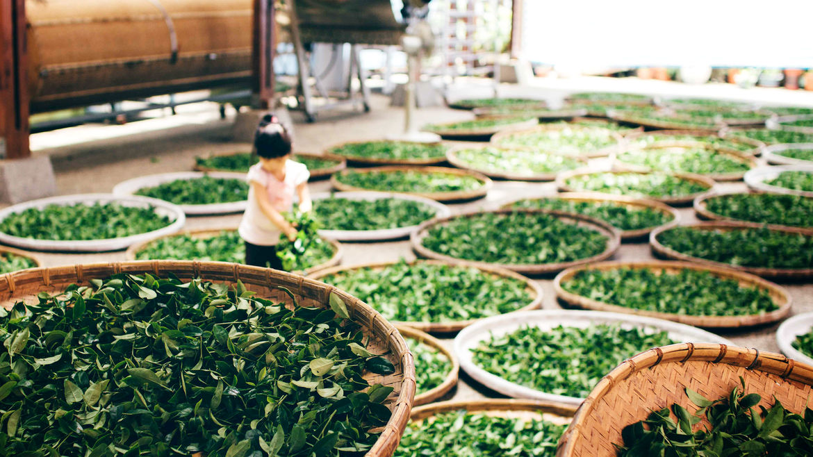 Cover Photo: An image of tea leaves in containers