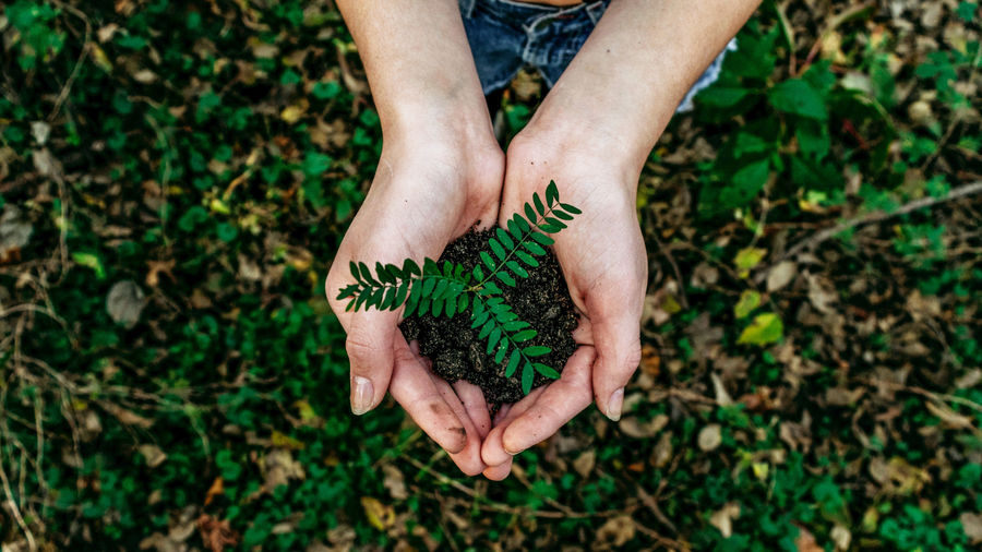 Cover Photo: An image of a person holding a seedling in their hands