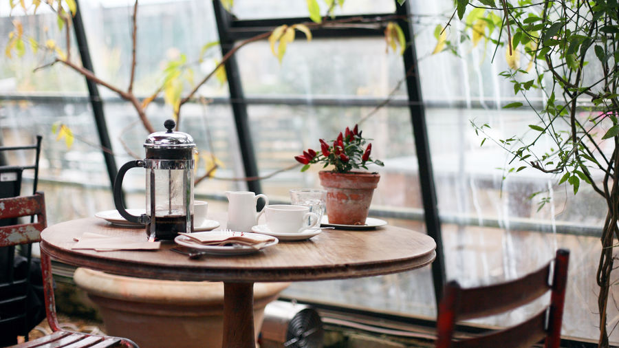 Cover Photo: A photograph of an empty cafe table in front of a large window. On the table is a French press, white cups, and a red floral plant in a clay pot. The table is flanked by two indoor trees.