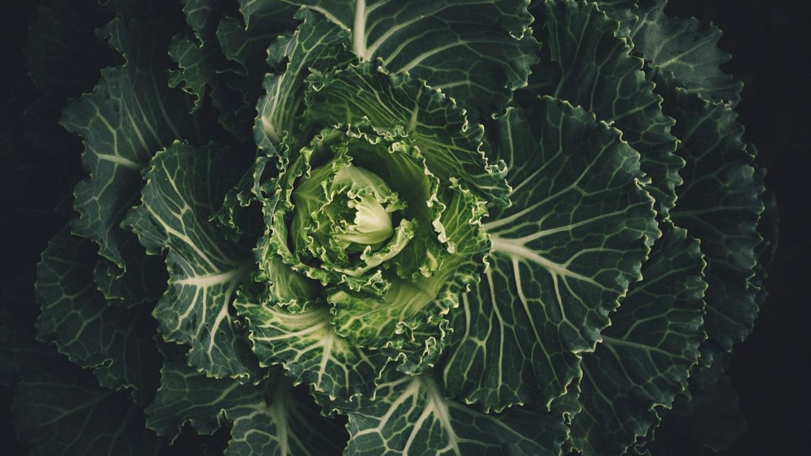 Cover Photo: An image of cabbage close up