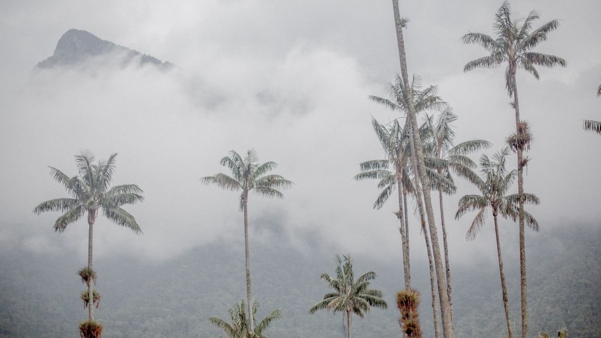 Cover Photo: This photograph shows palm trees rising up out of a dense gray fog. In the background, we can see the top of a mountain rising above the fog.
