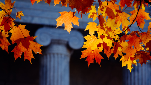 Cover Photo: A university campus in autumn, the maple trees aflame against the white columns of academia