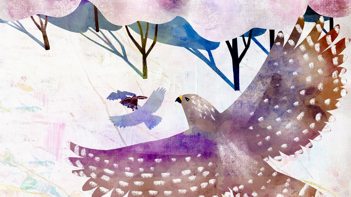 Cover Photo: An image of a large hawk soaring above the trees while a baby hawk is one the ground.