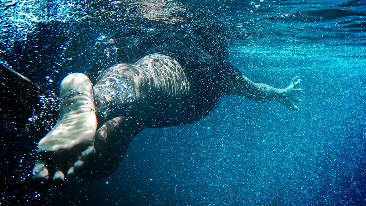 Cover Photo: A photograph of a person swimming away from the camera in a body of water. The water looks blue from the sky's reflection, and the swimmer's foot and leg are in the foreground.