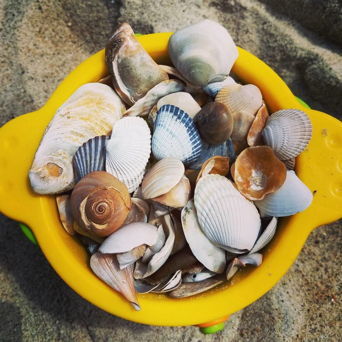 Cover Photo: Some seashells that Nicole's actual children collected last weekend