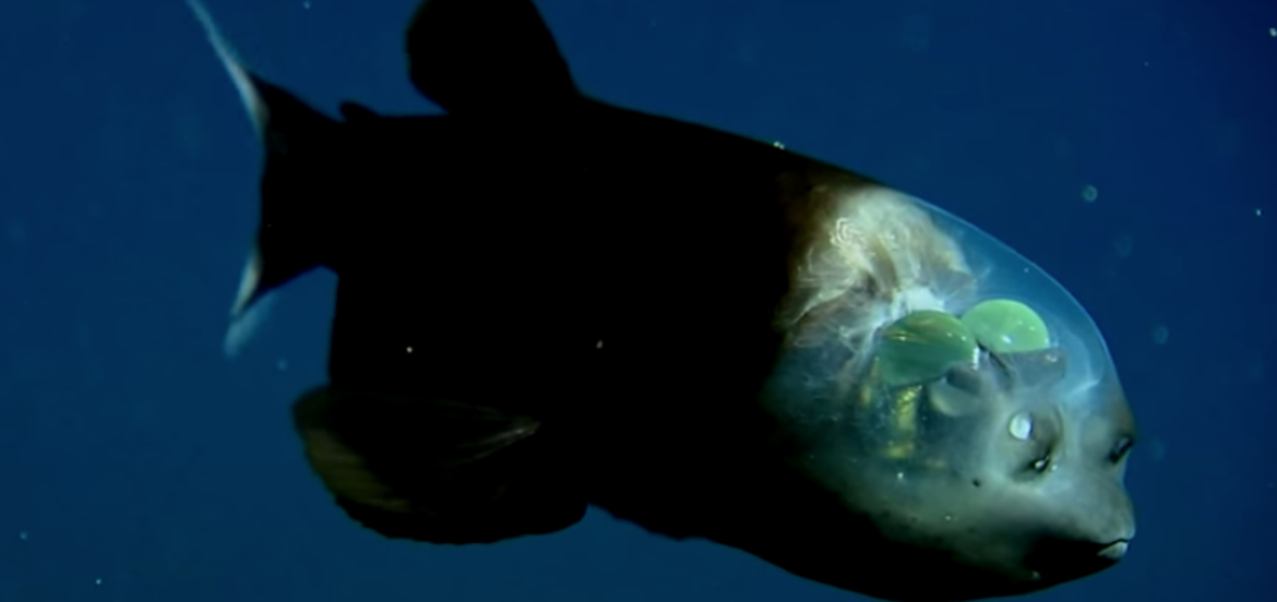 Cover Photo: Monterey Bay Aquarium Research Institute via YouTube