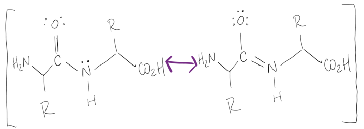 The two resonance structures from the previous image are shown without arrows in all black. There is a purple arrow in between them that has a double head.